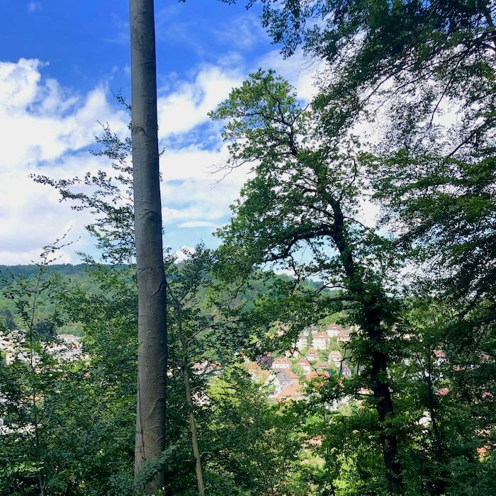 Ernährungsberatung Stuttgart Walk and Talk Heslach